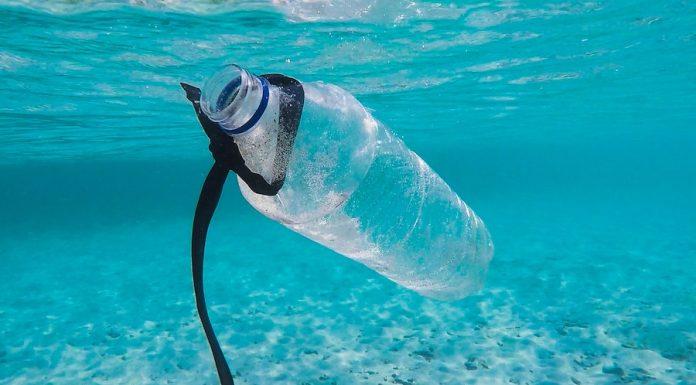 Plásticos 4